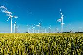 Wind Turbines in a grain Field