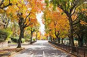 Suita city in autumn