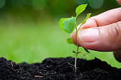 Human hands are planting seedlings in soil agriculture Growing plants nature sunlight green background nature