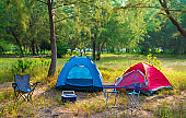 Tents Camping area, early morning with sunshine, beautiful natural place with big trees and green grass. Camping tent on camping green ground and trees