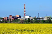 rapeseed field and factory, beautiful landscape