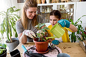 Mother and daughter planting flowers together. Repotting plants together at home garden. Spring house gardening.