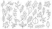 doodle hand drawnAutumn Leaves Set, Vector Illustration, Autumn leaves or fall foliage icons, Falling poplar, autumn leaves for seasonal holiday greeting card design