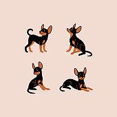 icon animal