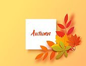 Autumn banner in paper cut style. Vector card illustration