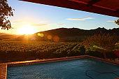 Afternoon Vineyard Sunset