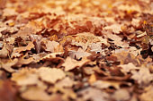 Autumn leaves in city park