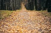 Autumn forest footpath