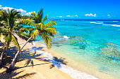 Palm trees on the wild tropical beach in Dominican Republic. Vacation travel background