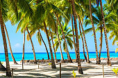 Palm trees on the caribbean tropical beach, Saona Island. Dominican Republic. Vacation travel background