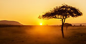 African sunset with acacia tree in Masai Mara, Kenya. Savannah background in Africa. Typical landscape in Kenya.