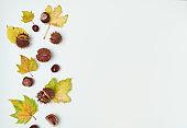 autumn background on white
