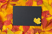 autumn background with paper sheet and leaves