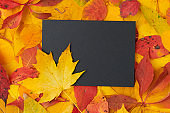 autumn flat lay with paper sheet and leaves