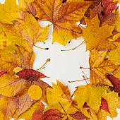 autumn background with leaves on white