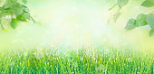 Banner frame of fresh lush green grass with dew drops of water and tree leaves on summer morning in light outdoors sun with natural blurry background. Close-up, wide format, copy space