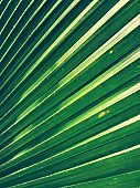 Full frame shot of green palm leaf