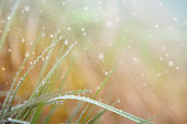 Rain Drops on Fresh Grass