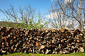 Piles of wood in nature