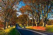 Tree lined road in autumn near Badbury Rings