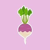 purple turnip flat design vector illustration. Adorable cartoon radish and cheerful turnip friendly character. Vector illustration. kawaii vegetable mascot for vegan and vegetarian