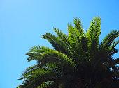 Palm tree leafs