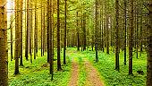 Path through Styrian forest in summer.