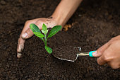 Woman hand holding soil, planting and caring for seedlings The concept of World Environment Day, take care of seedlings to grow, conserve the world, plant trees to reduce global warming.