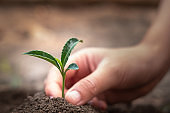 Small seedlings that germinate from complete soil And with human hands dripping from the seedlings, the idea of caring for seedlings and soil Save the world by planting trees.