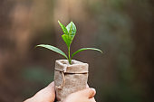 World Environment Day.Seedlings that grow in a linen bag.Plant  sack bag in the outdoor garden,collecting money or investing for the future to do business.Seedlings sprout from the soil.