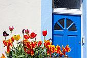 Tulips in Camden, London