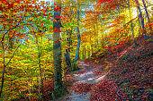 Autumn in Cozia, Carpathian Mountains, Romania