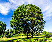 Green trees with blue sky as background