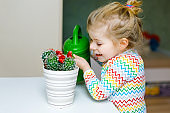 Little toddler girl watering flowers and cactus plants on window at home. Cute child helping, domestic life. Happy healthy kid holding water can, leaning help. Greenery, environment concept.