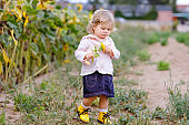 Cute adorable toddler girl on sunflower field with yellow flowers. Beautiful baby child with blond hairs. Happy healthy little daughter, smiling and holding bouquet. Outdoor portrait on summer day.