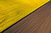 Drone view above yellow rape rape fields, agriculture concept from drone perspective