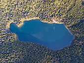 Aerial view of a forest lake. Aerial view of blue lake and green forests on a sunny summer day. Drone photography. Forest and lake border, Toned image from above. Coastline view from the drone summer