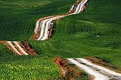 A long and winding rural path crosses the green hills, Tuscany, Italy