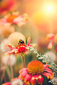 The bee is sitting on a flower. Vertical photography.
