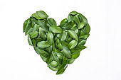 Green leaves in heart shape on white background. flat lay. Tropical plant green leaves spring time, environment and love protected earth day concept. Close up leaves