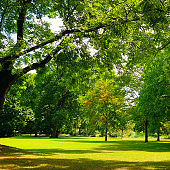 Green lawn with big trees and clear bright sky.