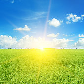 Green field and sun on blue sky with light clouds.
