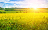 Spring fresh landscape of colorful fields, sunrise sky and beautiful hills valley.