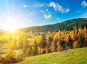 Beautiful mountain landscape with colorful autumnal forests and vibrant sunset. The concept is travel.