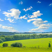 Green grass field on small hills and blue sky with clouds.