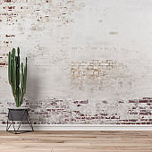 Empty wall background with cactus left
