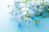 The flower which is called blue-colored Delphinium