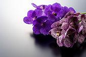 Purple Vanda