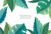 Vector botanical background with green trendy exotic palm and monstera leaves isolated on white background. Design for print, fabric, invitation, brochure, card, cover, wallpaper