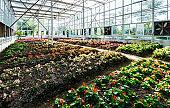 Flower seedlings in glass greenhouse